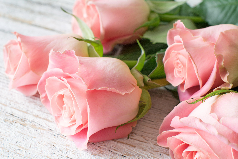 Открытки с розами, поздравлением днем