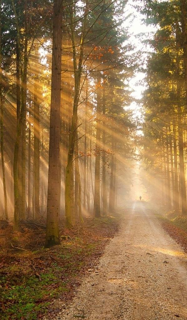 дорога в лесу вертикальные картинки скудноват, это