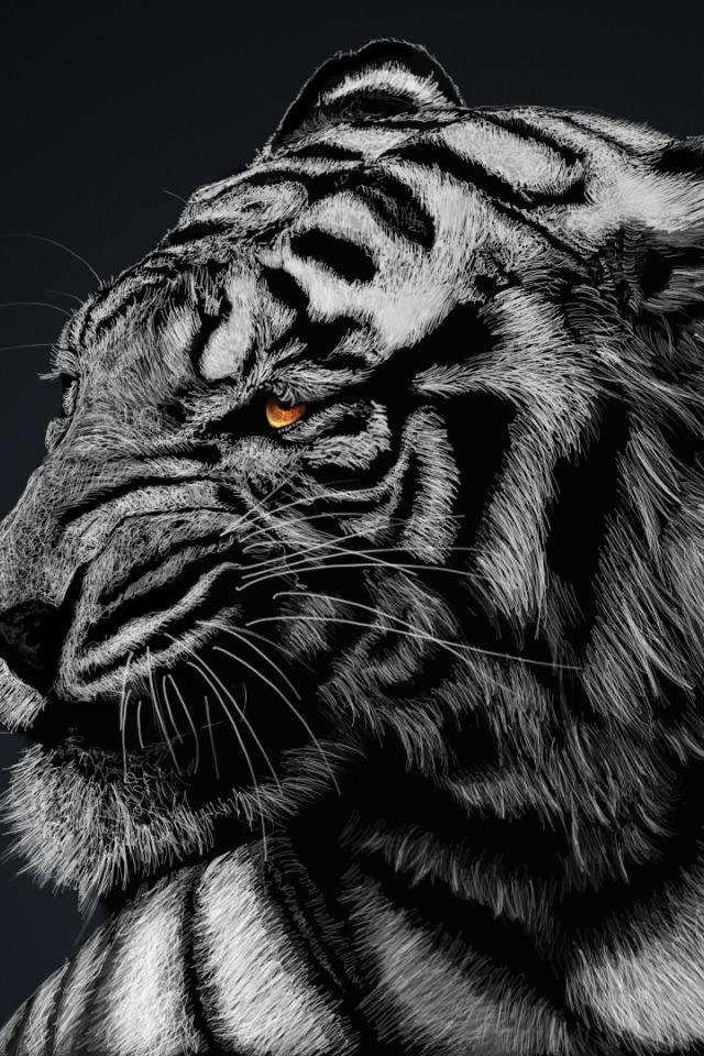 тигры черно белые картинки