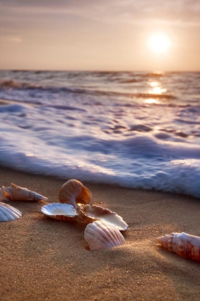 красивая картинка море песок ракушки молодыми