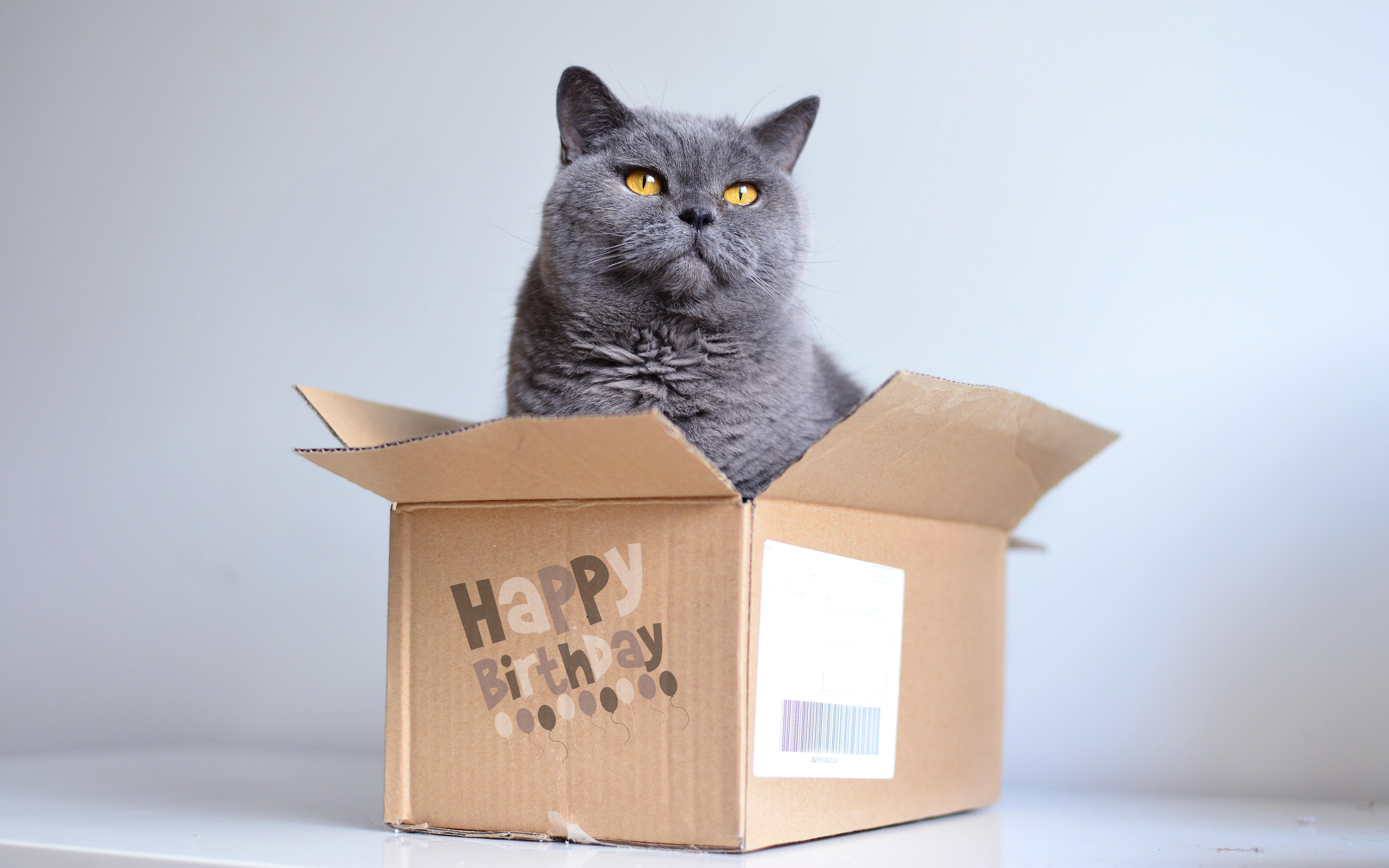 Открытки с британским котами
