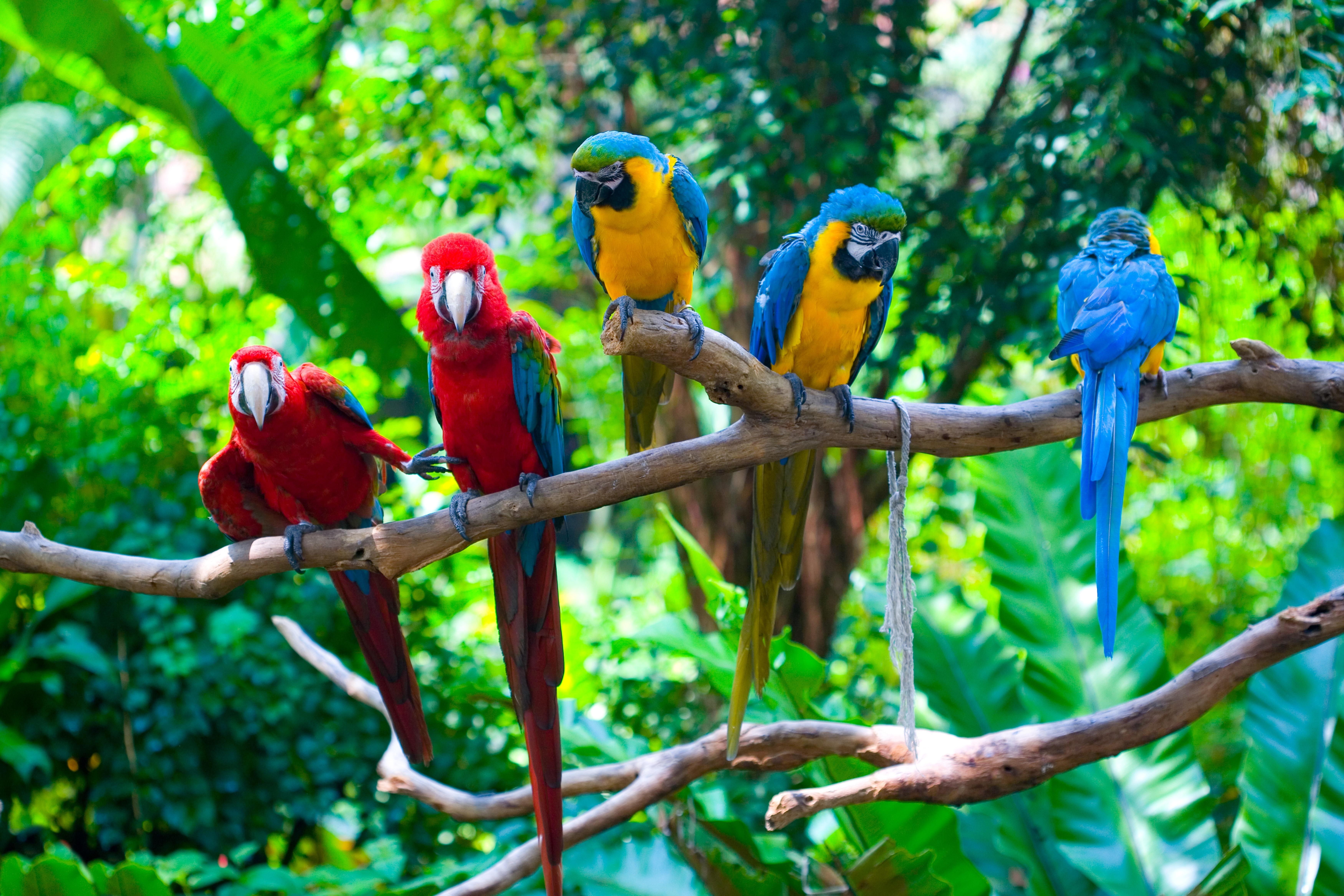 природа животные птицы попугаи  № 103582  скачать