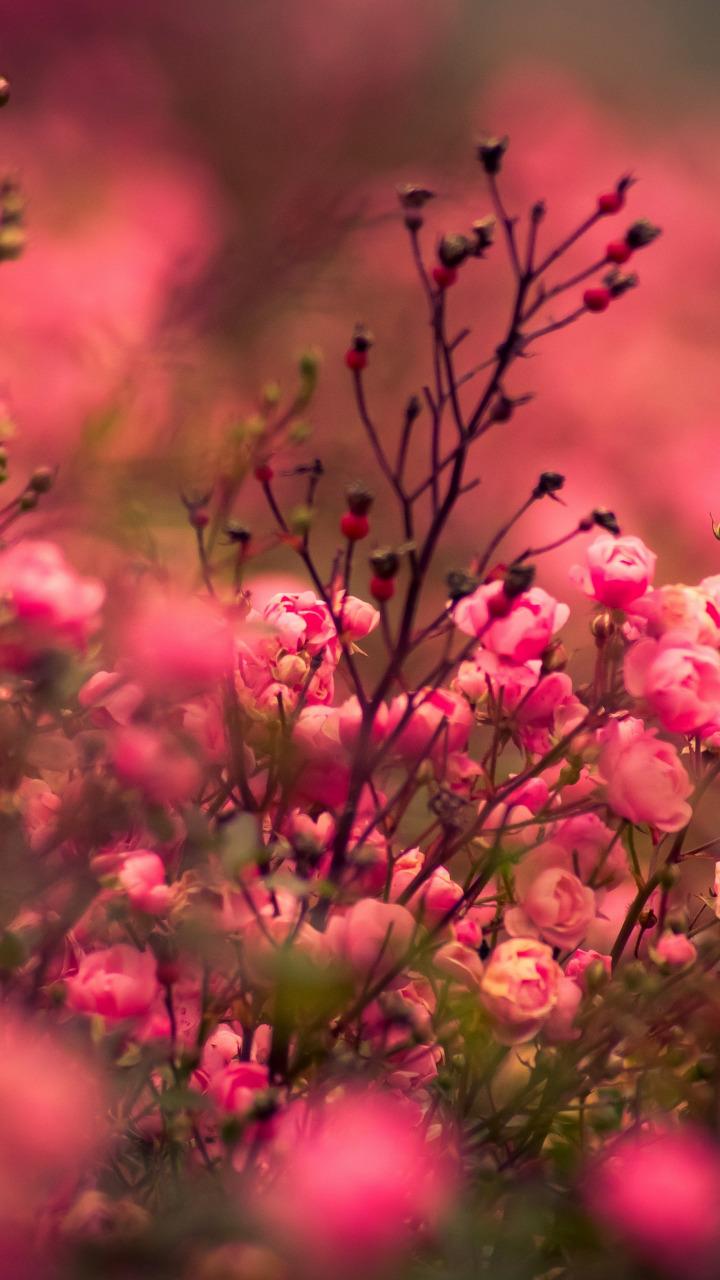 Цветы на заставку телефона