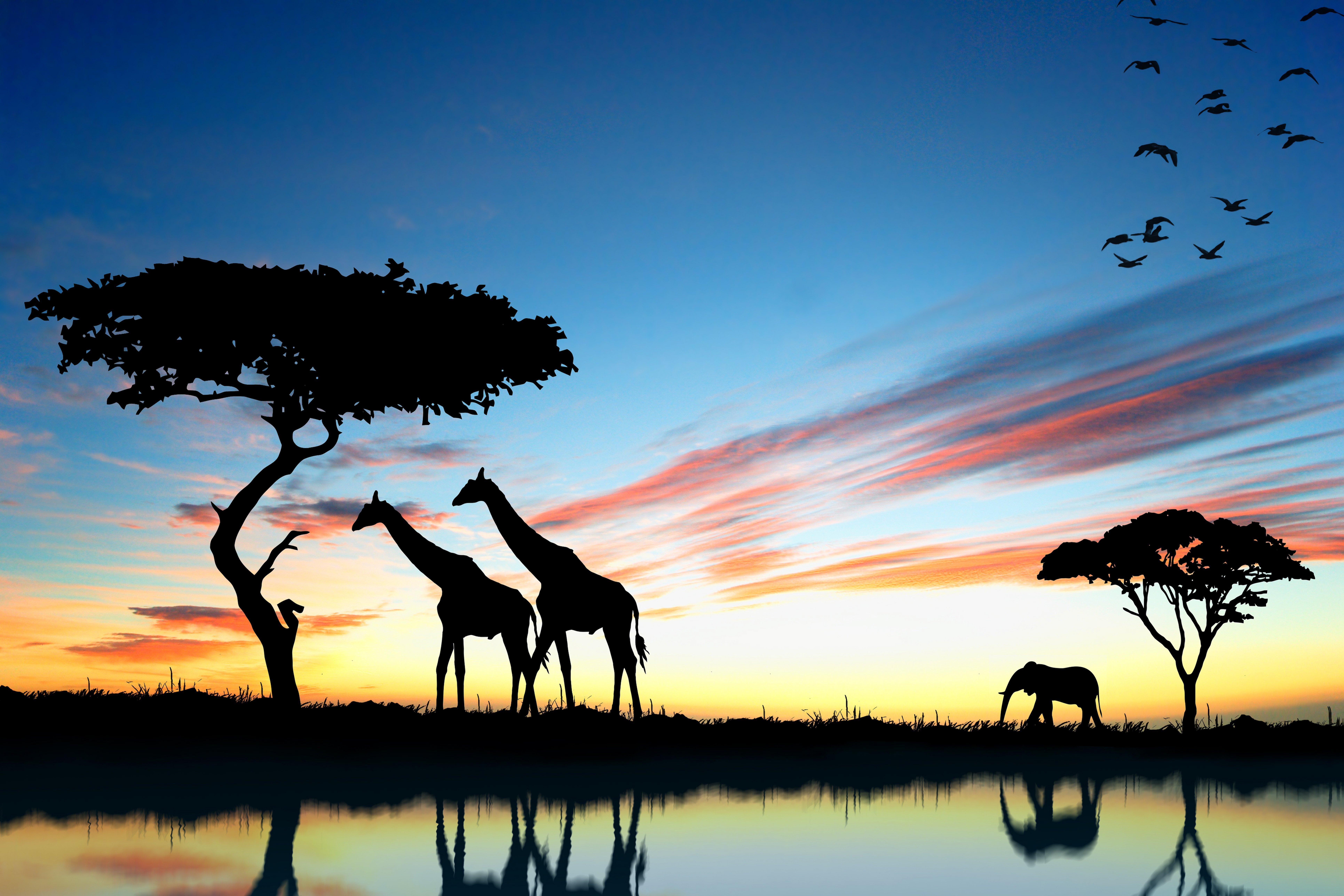 постеры с природой и животными каждого
