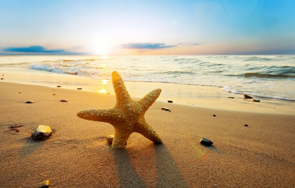 Картинка песок, море, пляж, вода, солнце, природа, река, камни, фон, обои, волна, wallpaper, морская звезда, sea, …