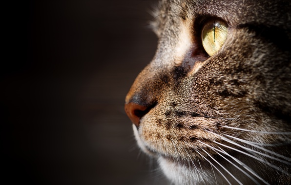 Картинка кошка, кот, макро, фон, портрет, мордочка, профиль