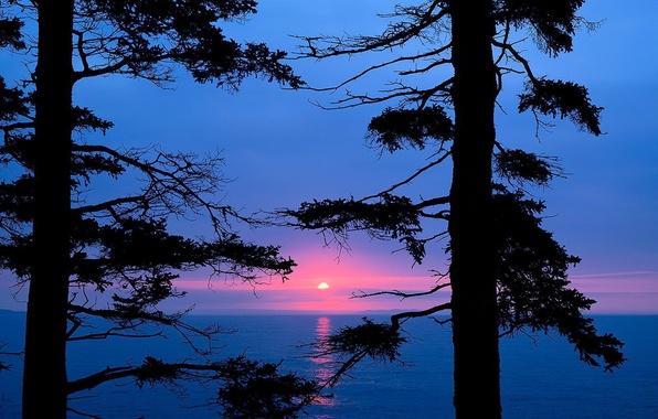 Фото обои озеро, деревья, ветки, закат
