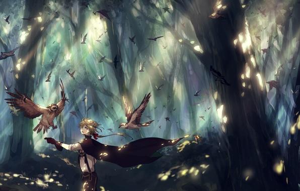 Картинка лес, деревья, птицы, природа, аниме, арт, парень, canarinu kmes