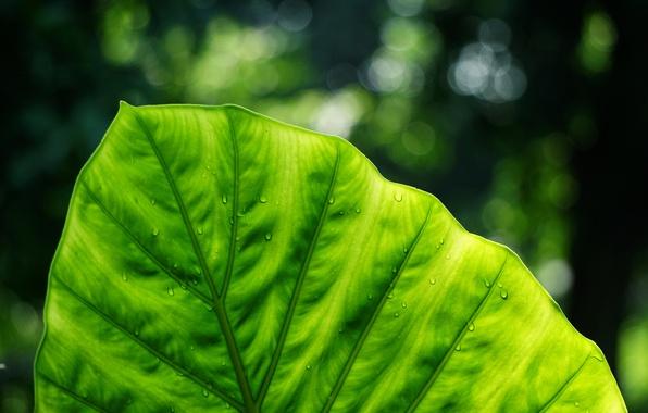 Картинка макро, лист, зелёный, nature