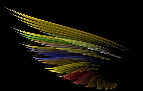 Картинка свет, птица, цвет, тень, перья, крыло