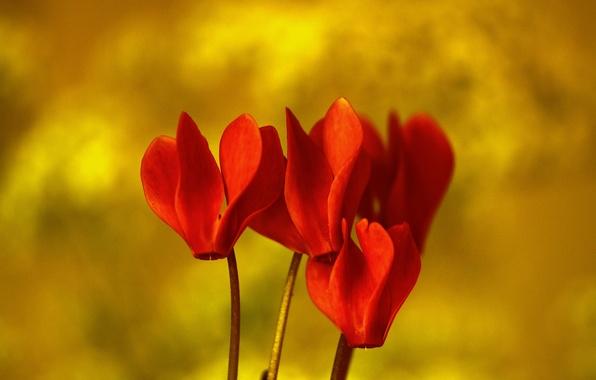 Картинка цветы, природа, растение, лепестки, экзотика