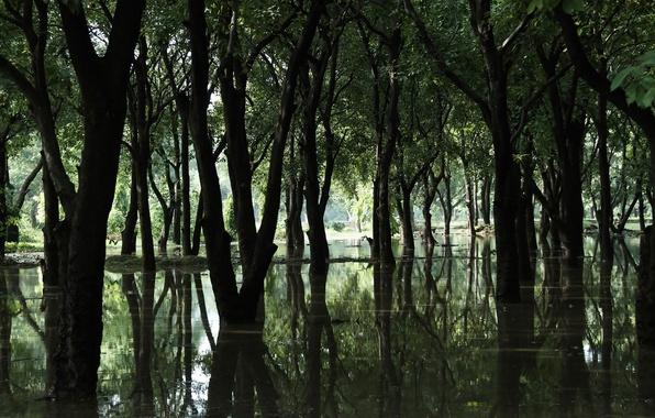 Картинка лес, вода, деревья, болото