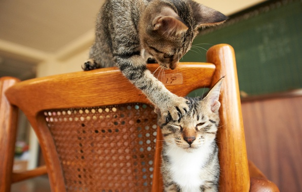 Картинка кошки, игра, лапа, стул