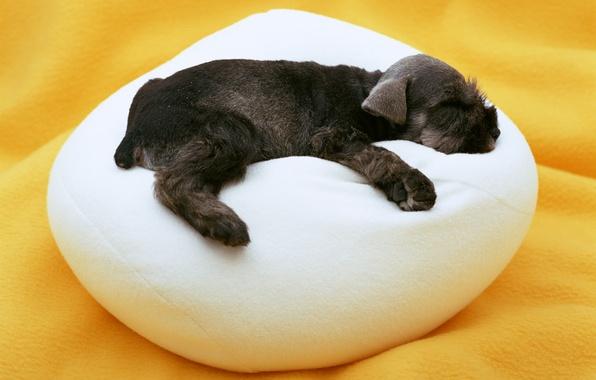 Картинка сон, собака, малыш, щенок, подушка