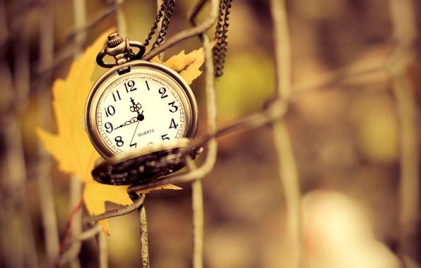 Картинка осень, макро, желтый, природа, время, лист, сетка, стрелки, часы, ограда, циферблат, подвеска