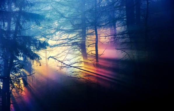 Картинка лес, свет, деревья, ветки, природа, темнота, радуга, спектр, дремучий