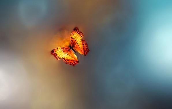 Картинка бабочка, Ƹ̵̡Ӝ̵̨̄Ʒ, Josep Sumalla, Golden Age