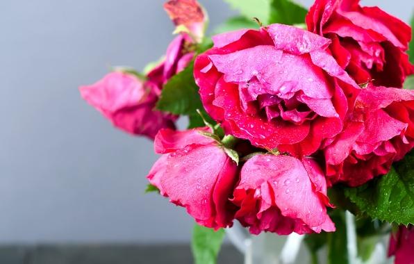 Фото обои макро, розы, букет