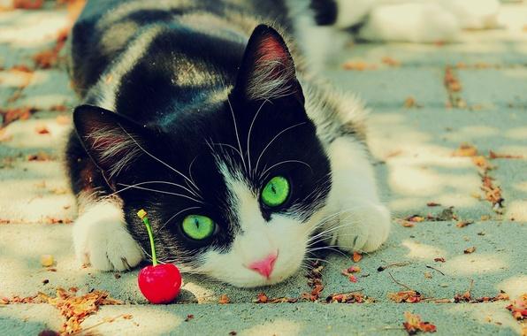 Картинка глаза, кот, вишня, зелёные, чёрно-белый