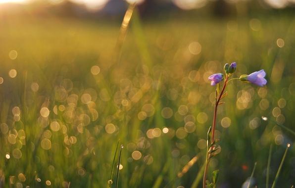 Картинка поле, лето, трава, капли, макро, свет, цветы, свежесть, роса, блики, красота, растения