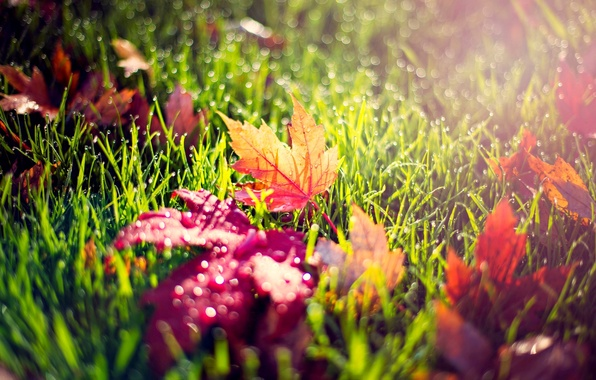 Картинка осень, трава, листья, капли, макро, свет, природа, роса, желтые, красные, зеленая