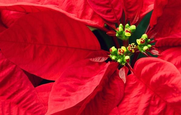 Картинка листья, красные, Цветочки