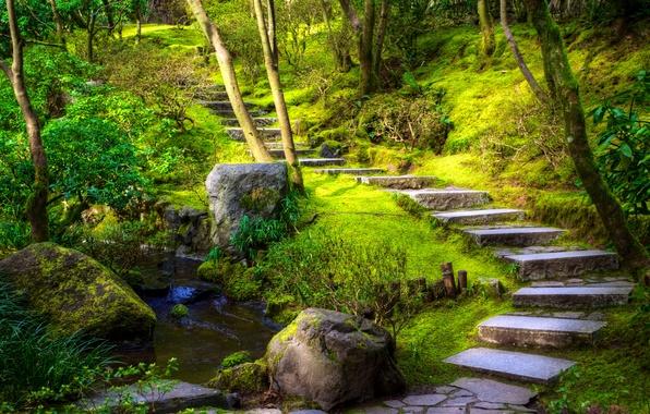 Картинка зелень, трава, деревья, парк, ручей, камни, мох, дорожка, ступеньки, США, кусты, Oregon, Portland