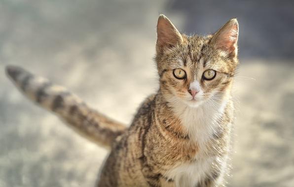 Картинка кошка, взгляд, котёнок