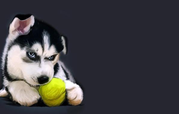 Хаски обои для рабочего стола собаки