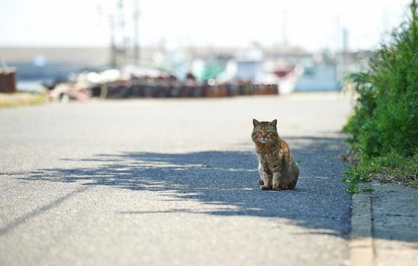 Картинка кошка, город, улица