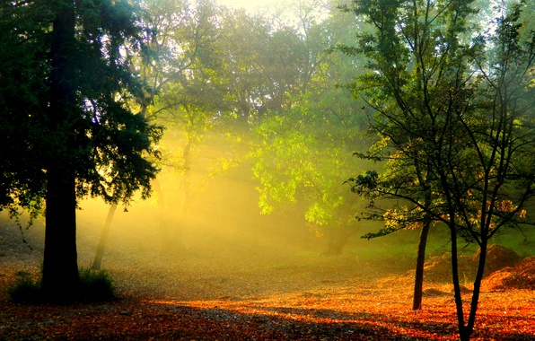 Картинка лес, солнце, лучи, деревья, природа, туман, рассвет, листва, утро, дымка