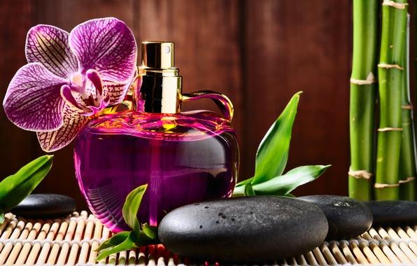 Картинка цветок, камни, духи, бамбук, флакон, орхидея, черные, спа, парфюм, spa, массажные, базальтовые