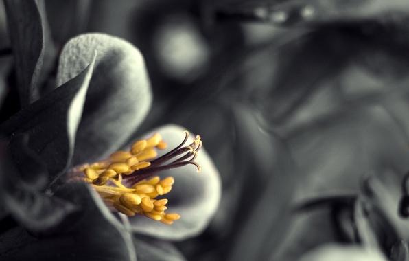 Картинка лепестки, тычинки, пестик, изящно