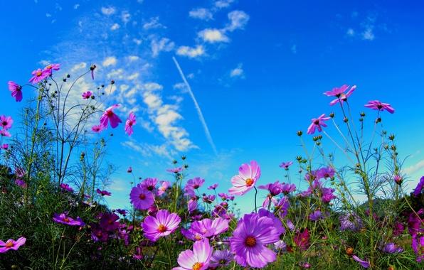 Картинка фото, Цветы, Небо, Поле