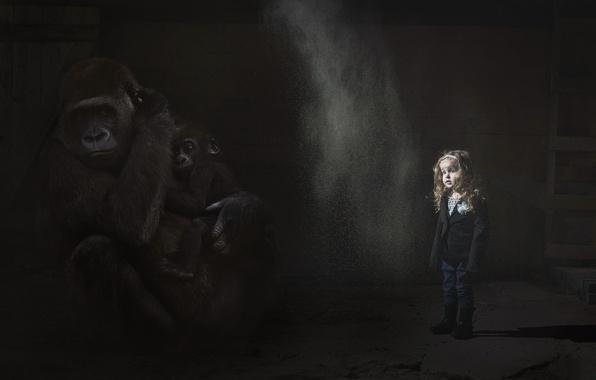 Фото обои девочка, мрак, обезьяны