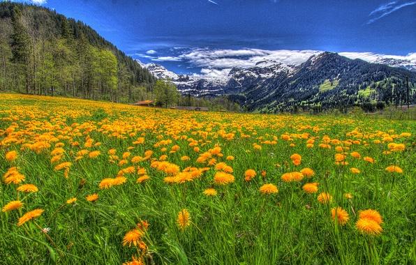 Картинка небо, трава, облака, снег, деревья, пейзаж, цветы, горы, природа, green, дома, grass, forest, зеленая, sky, …