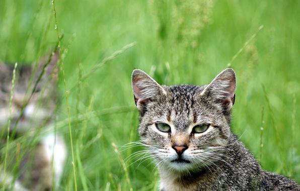 Картинка зелень, кошка, кот, взгляд, смотрит, cat