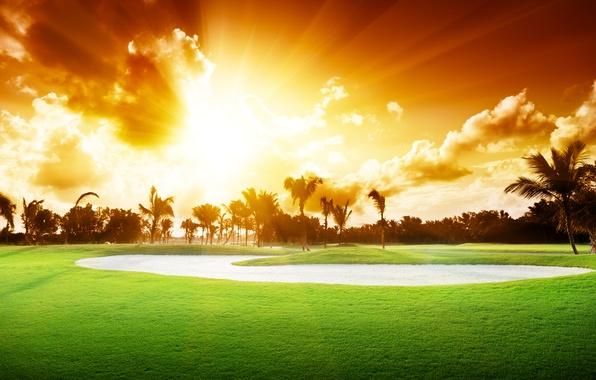 Картинка небо, трава, облака, деревья, пейзаж, закат, природа, пальмы, красиво, grass, sky, trees, landscape, nature, sunset, …