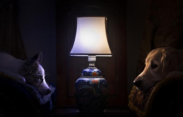 Картинка собаки, уют, дом