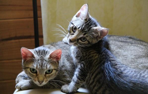 Картинка кошка, котенок, отдых, семейство