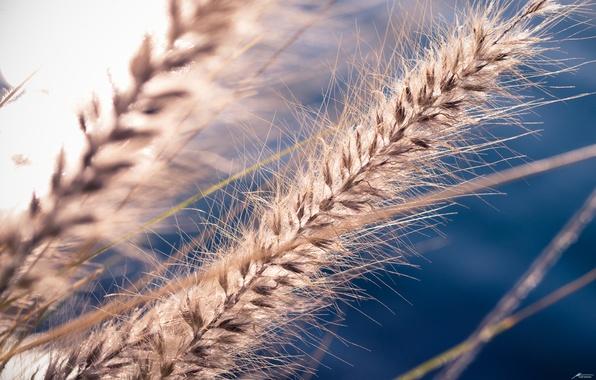 Картинка семена, SPIKE, rostenie