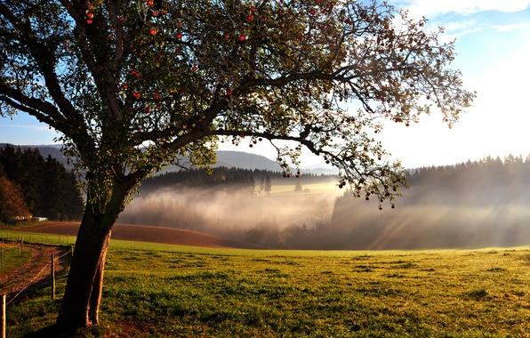 Картинка лес, дерево, холмы, яблоня, конец лета