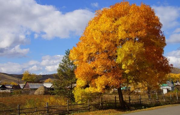 Картинка осень, природа, дерево, краски, деревня