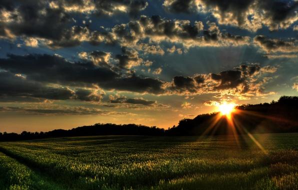 Картинка поле, трава, солнце, облака, деревья, закат, природа, ветер, пейзажи, поля, леса