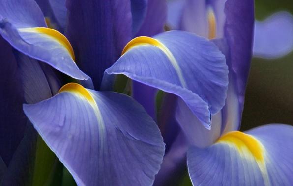 Картинка цветок, фиолетовый