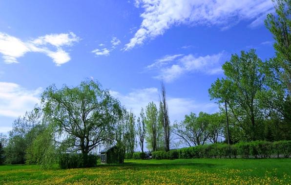 Картинка небо, трава, облака, деревья, цветы, луг, домик, одуванчики