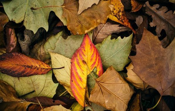 Картинка осень, листья, макро, фон, widescreen, обои, цвет, листик, wallpaper, листочки, широкоформатные, background, полноэкранные, HD wallpapers, …