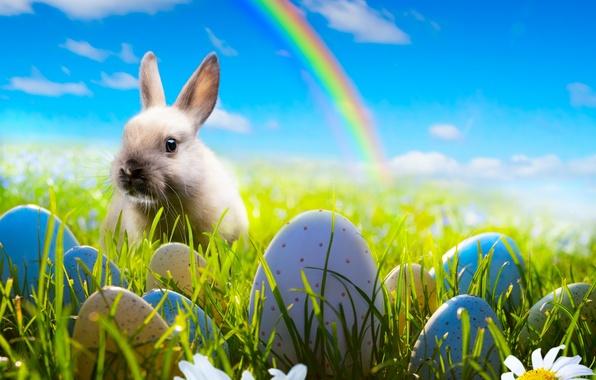 Картинка небо, трава, цветы, ромашки, яйца, радуга, весна, кролик, луг, пасха, rainbow, grass, sunshine, rabbit, flowers, …