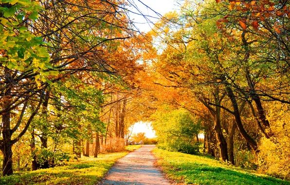 Картинка дорога, осень, деревья, пейзаж, природа, листва, road, trees, landscape, Autumn, scenery, perfect view, опадающая