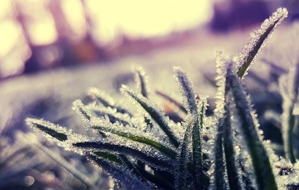 Картинка холод, иней, трава, кристаллы